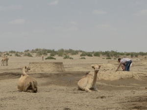 a water point in the middle of the Danakil desert