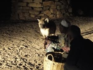 Feeding the hyenas at night outside Harar's walls