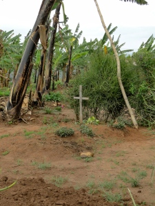 A family grave in a Rwandan farmer's backyard