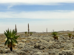 a typical view of the Sanetti plateau